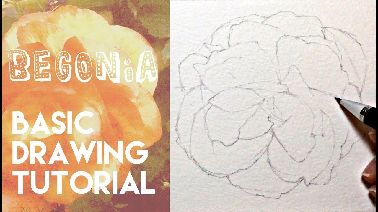 How To Draw A Begonia Flower Pencil Drawing Tutorial Flower