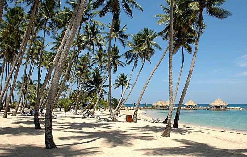 Coconut Trees In Juan Dolio Beach Juan Dolio San Pedro De Macoris