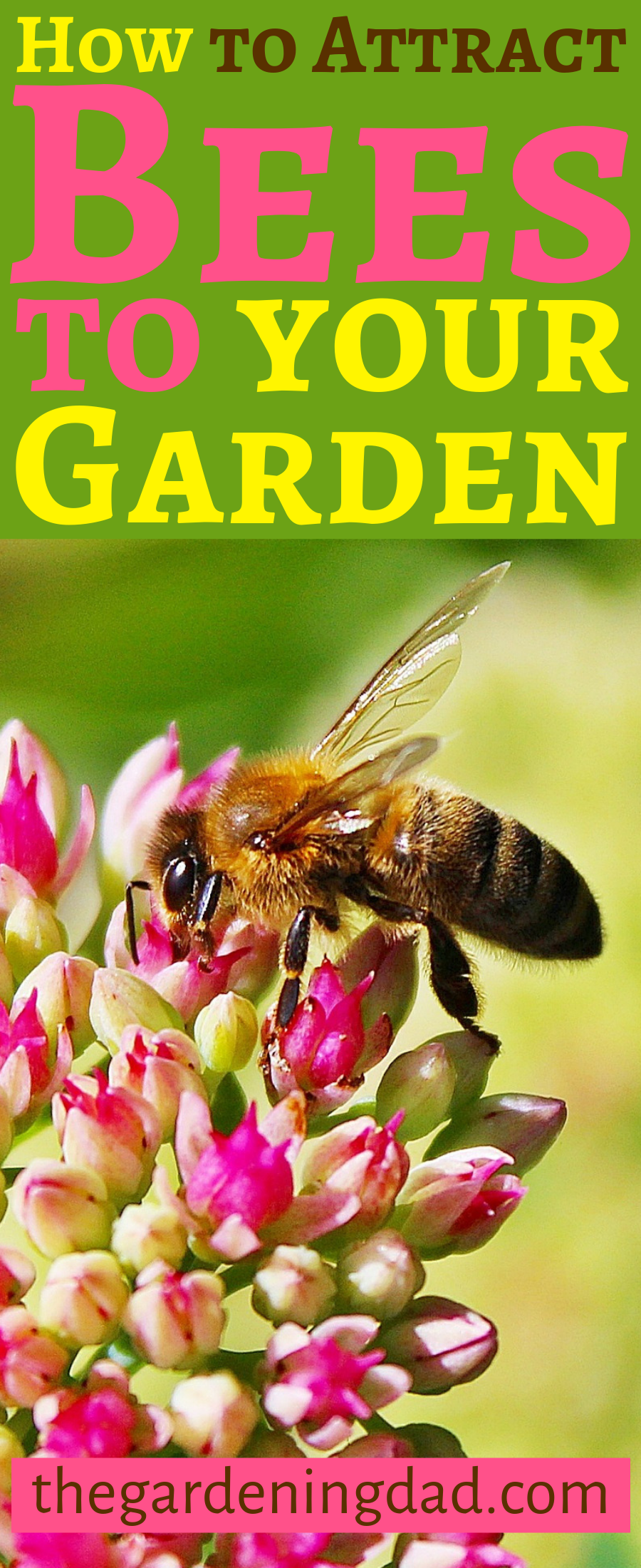 50 USEFUL Plants that Attract Bees to Your Garden Plants