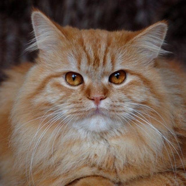 449c661f48c29f217760b677b224fb95 - How To Get Rid Of Cat Dander On Furniture