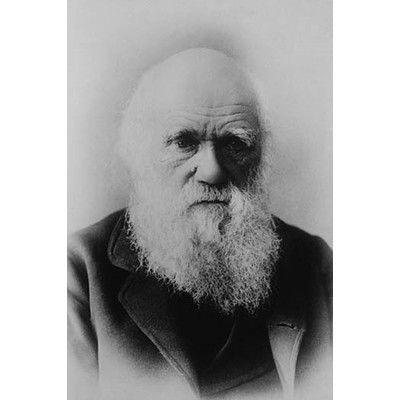 Buyenlarge Portrait Of Charles Darwin Photographic Print