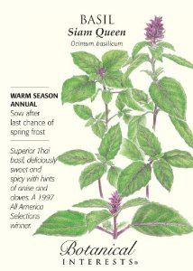 Herb  Basil Clove Flavor Annuals Russian Heirloom