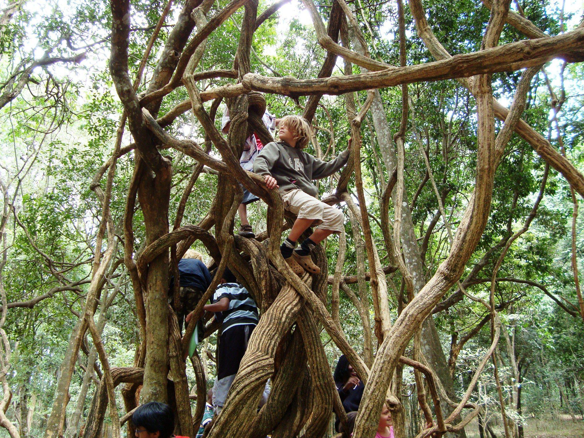 Tropical+Rainforest+Plants+Adaptations Cuipo Blog