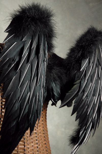 Feather Wings 33x22 Black Feathers & Marabou  Wings    $110 Website has tons of craft supplies as well.