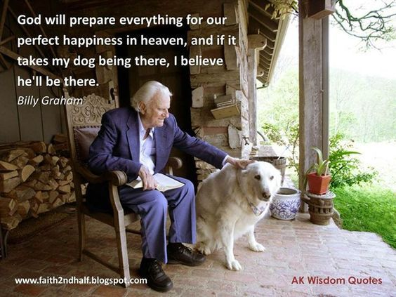 Billy Graham S Comments On Pets Animals In Heaven Billy Graham Quotes Dog Heaven Billy Graham