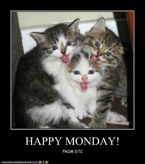 Happy Monday | Funny cat memes, Cats, Cat memes