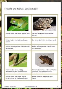 Frösche / Amphibien