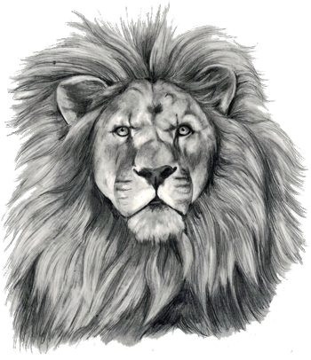 small+lion+tatoos+for+women liontattoosdesigns751