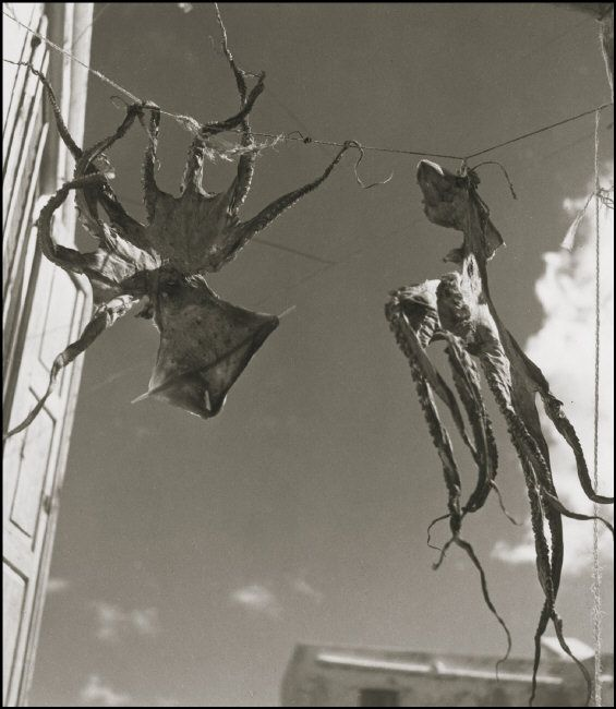 2000-lightyearsfromhome:  Herbert List GREECE. Korinth. Octopus drying in the sun. Ghosts from the sea. 1939.