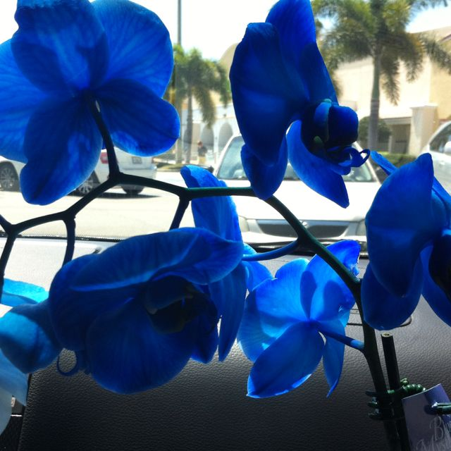 Ry got me some beautiful light blue orchids for mothers day