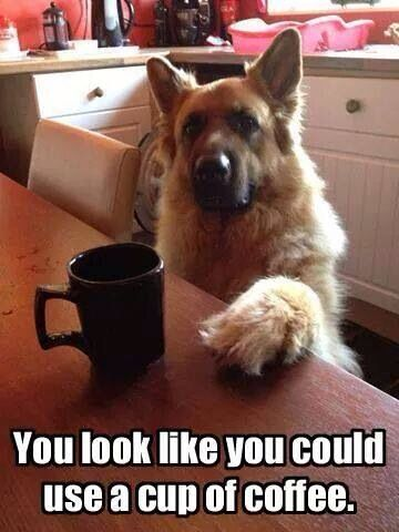 20 Funny Coffee Memes To Enjoy With Your Morning Coffee Top5 Funny Animals Cute Pugs Funny Animal Pictures