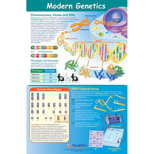 modern genetics info and education poster to find such posters see custom results at http