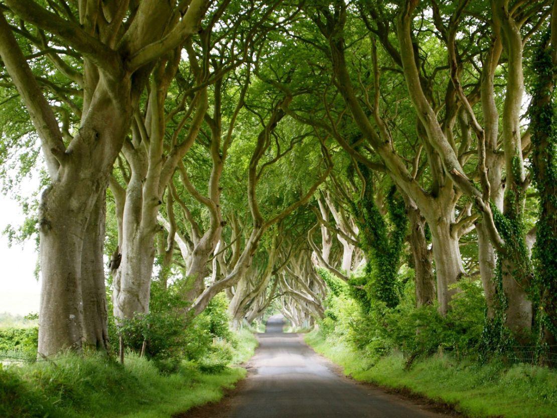Dark Hedges, Irlanda