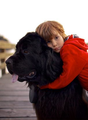 Best Dog Breeds For Children | 10awesome.com