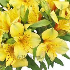 Bright Yellow Alstroemeria Flower Fiftyflowers Com Alstroemeria Yellow Flowers Flowers