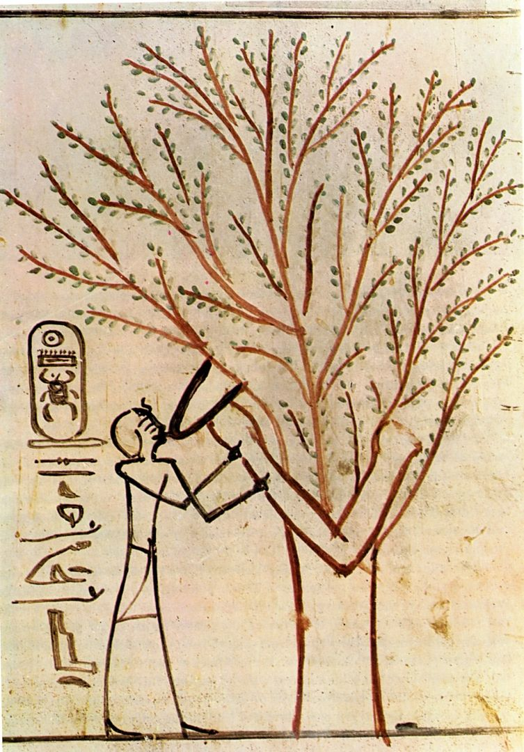 Suckling of the King by Isis in the guise if a sycamore, Tomb of Thoutmosis III, 18th dynasty http://plant-alchemy.com/gallery/egypt
