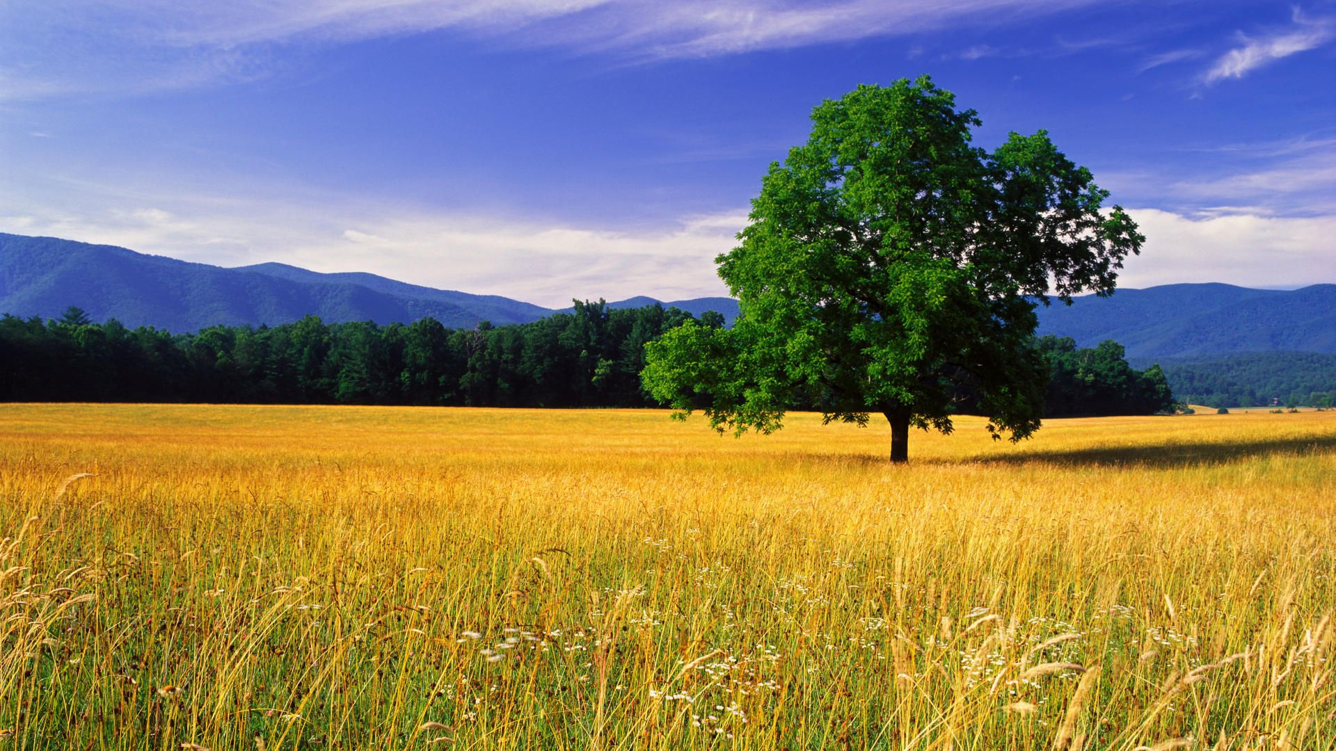 14 Awesome Nature & Landscape Wallpapers | Landscaping, Beautiful ...