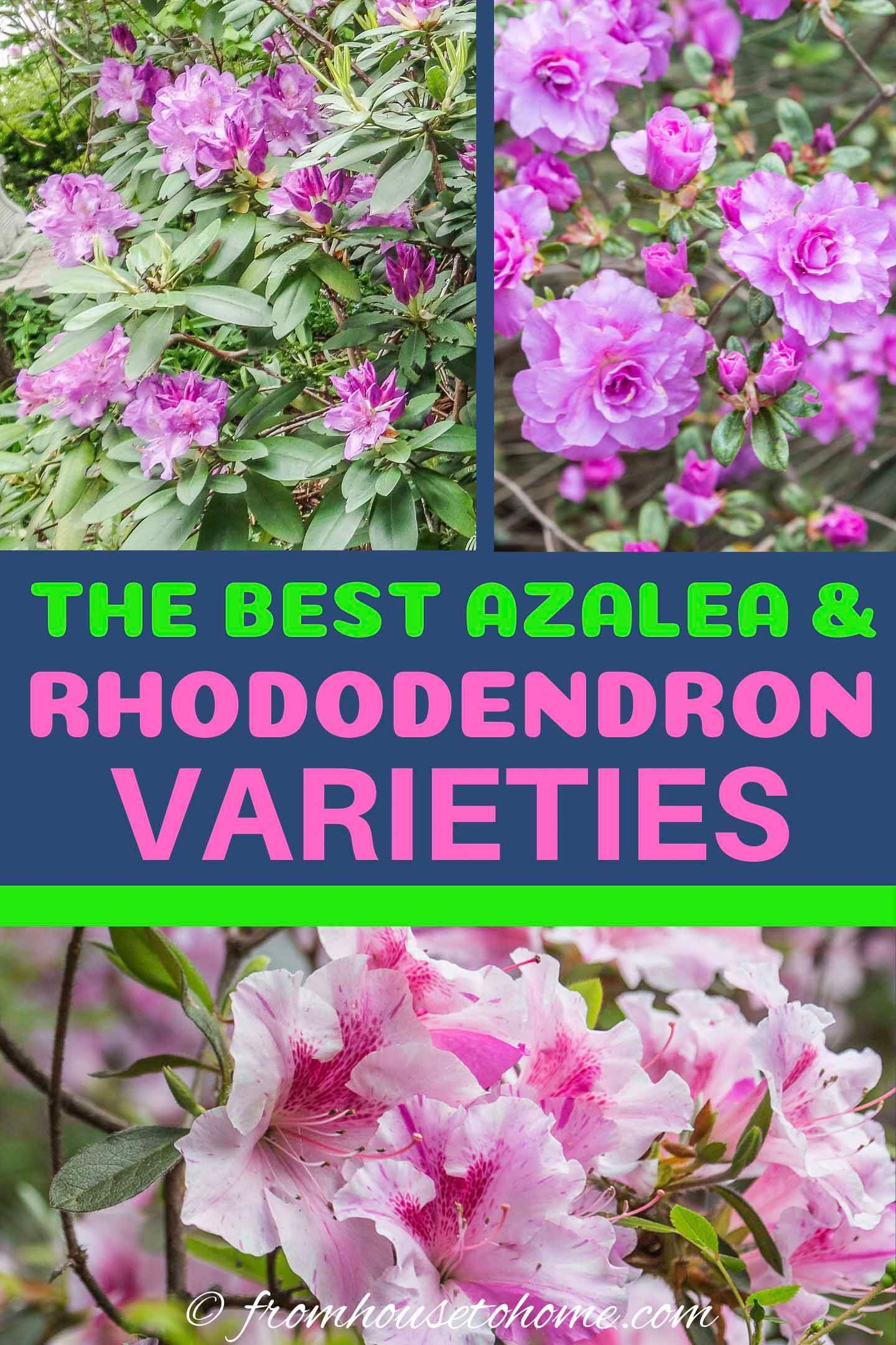44a584ae5544cb328c583921f2841008 - Best Gardens For Azaleas And Rhododendrons