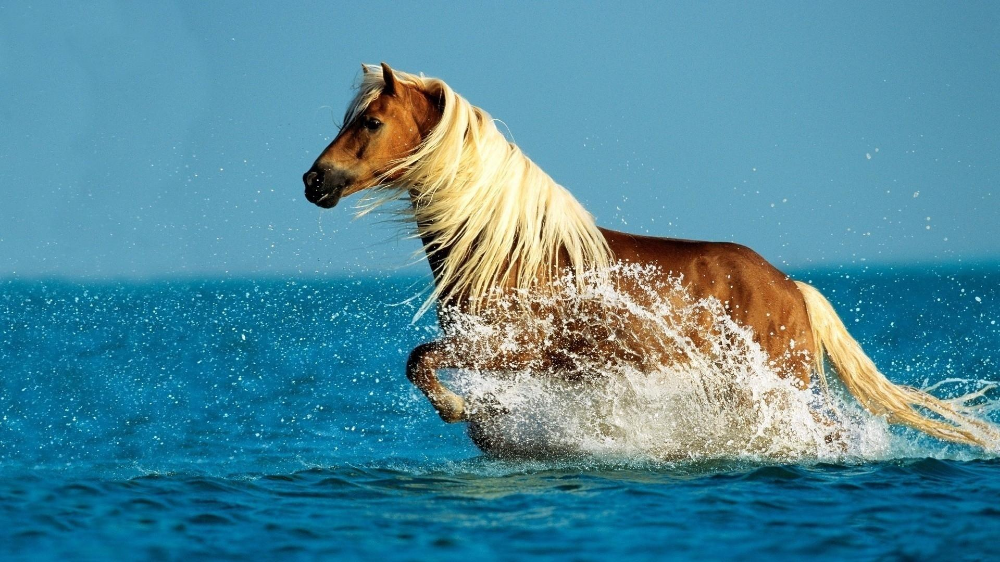 Pin By Valerie Chritton On Horse Horse Wallpaper Horses Wild Images, Photos, Reviews