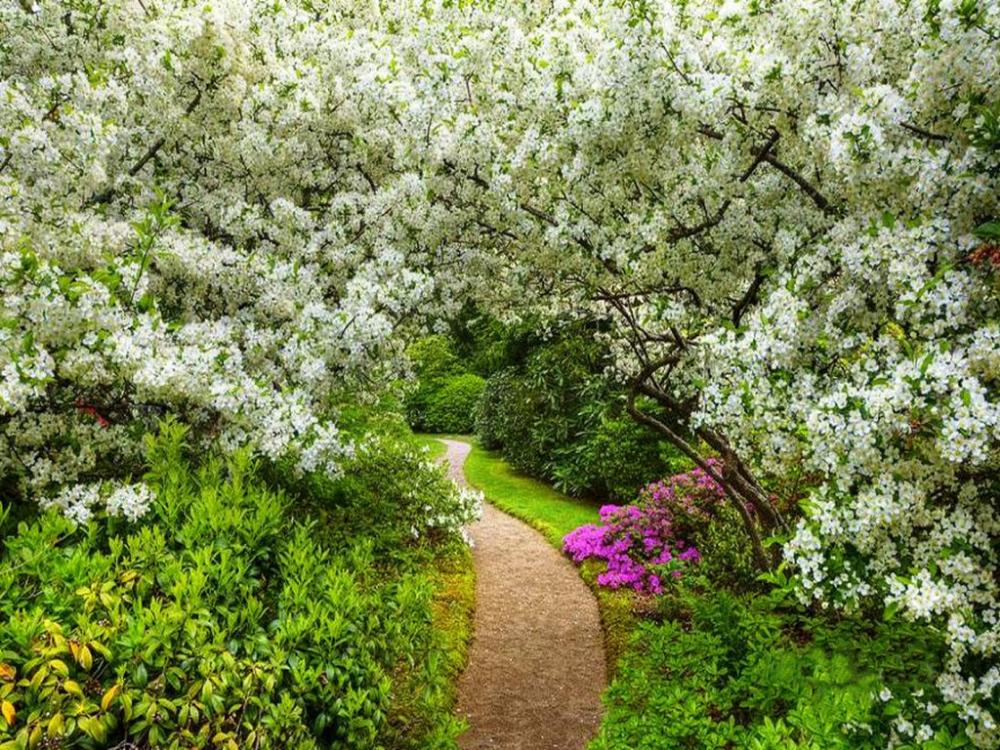 картинки когда цветут сады оптимально использование пробкового