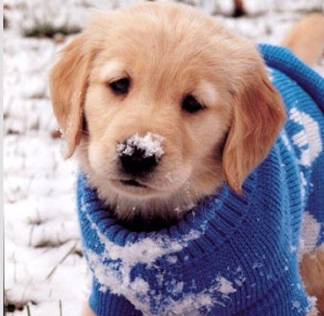 Un caldo maglione...:)
