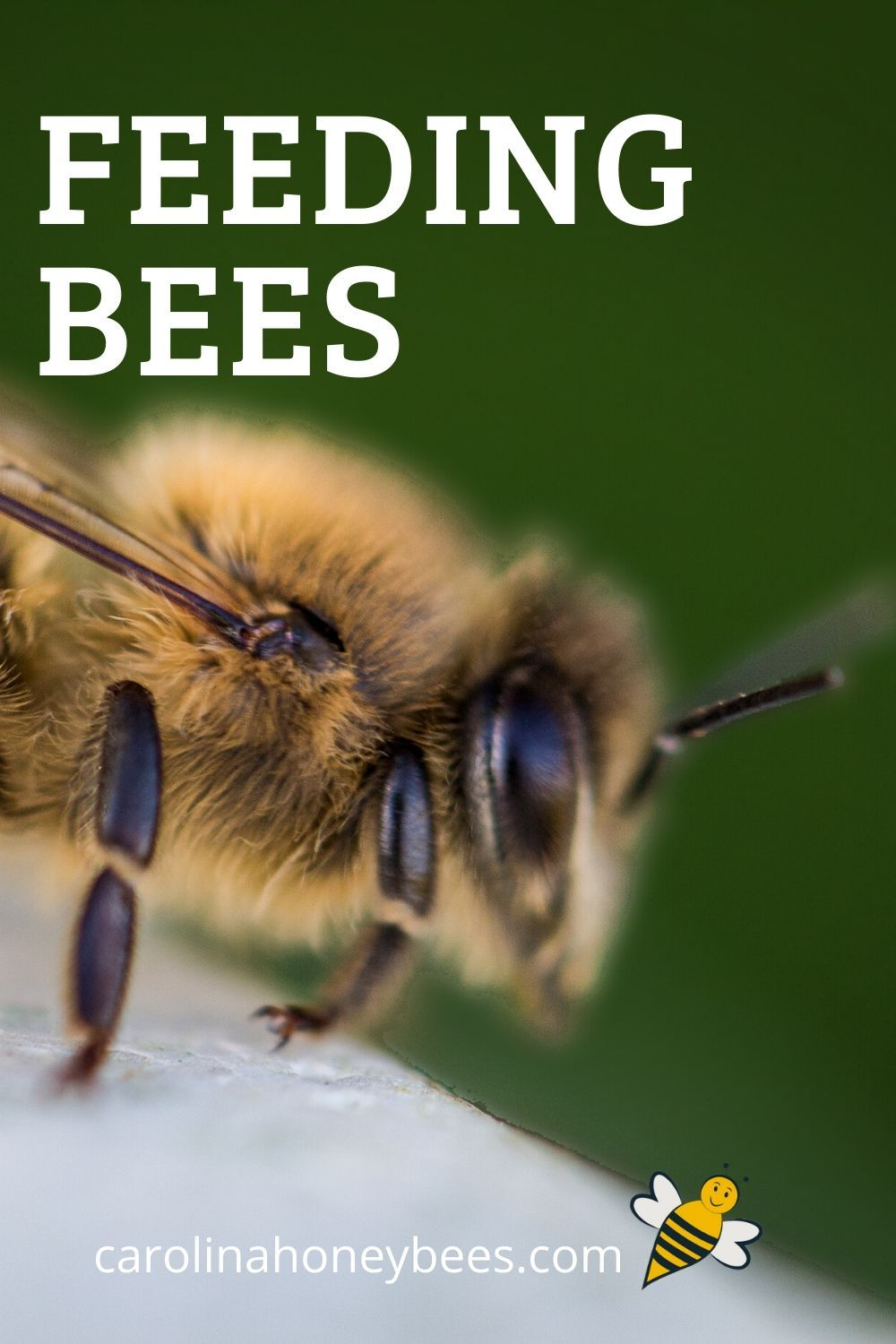 Pin On Beekeeping Tips And Tricks
