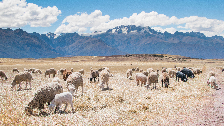 Peru Photo By Blake Richard Verdoorn Ollantaytambo Peru Bilder Kostenlose Bilder Fotografie