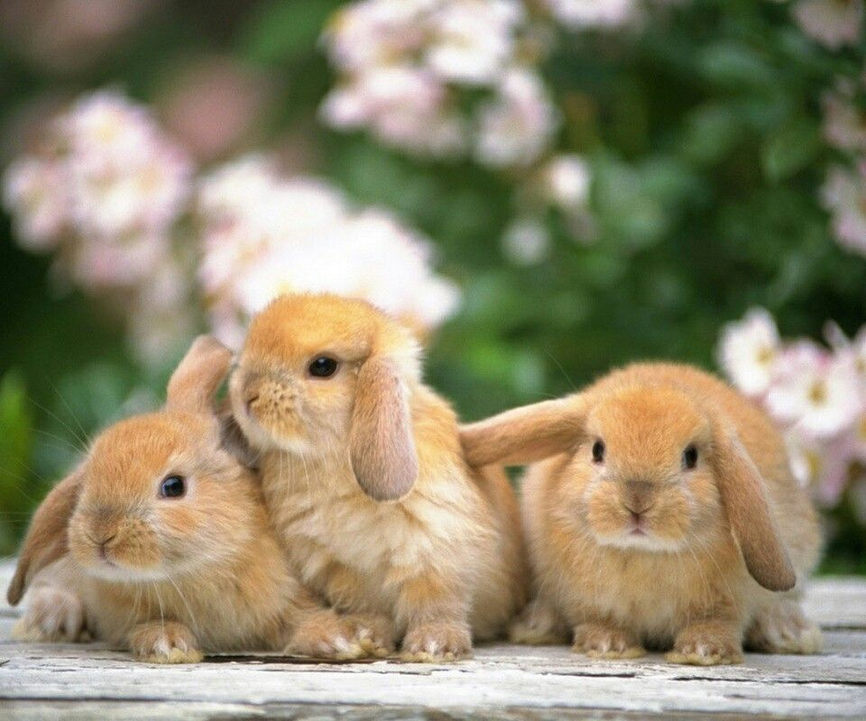 These are in my back yard!! | Cute baby bunnies, Animals ...