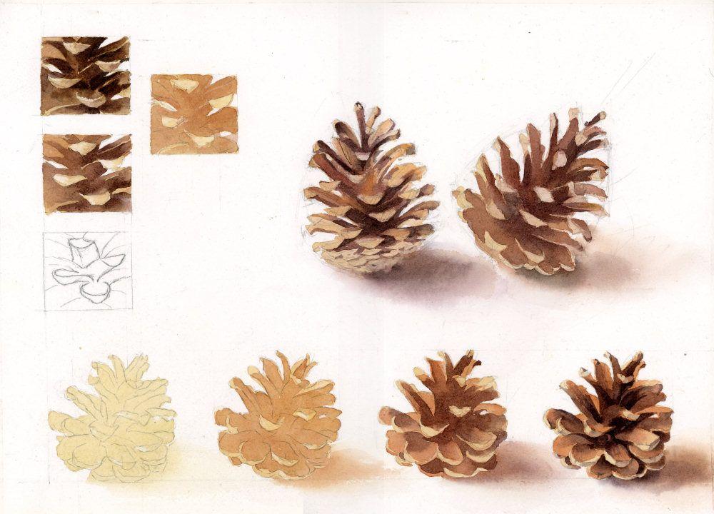 pinecone pomme de pin ou pigne de pin cath aquarelle. Black Bedroom Furniture Sets. Home Design Ideas
