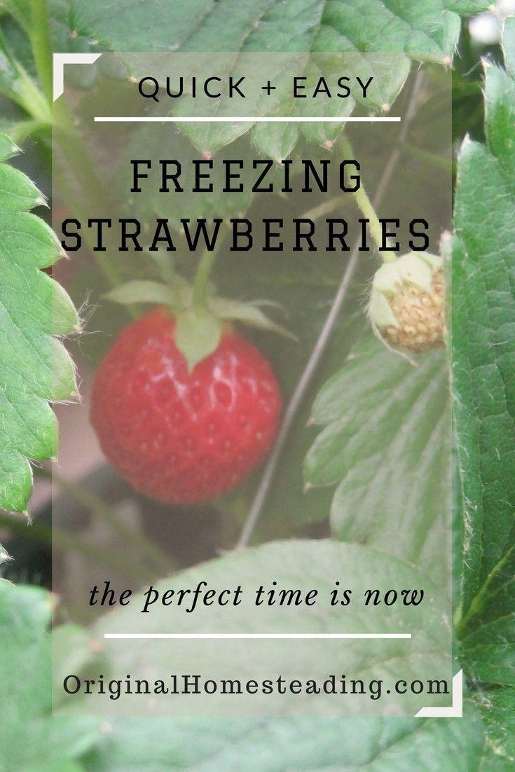 How to freeze strawberries freezing strawberries quick