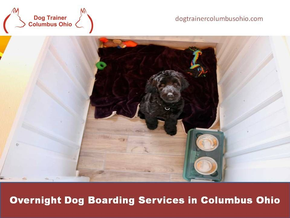 Overnight Dog Boarding Services In Columbus Ohio In 2020 Dog