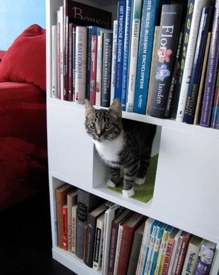 Bookcase adapted for your cat
