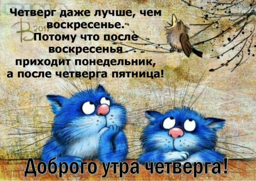 Pin By Kira Lanak On Dni Nedeli Dobroe Utro In 2020 Blue Cats Cats New Scientist