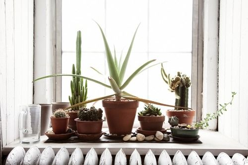 .. cacti collection ..