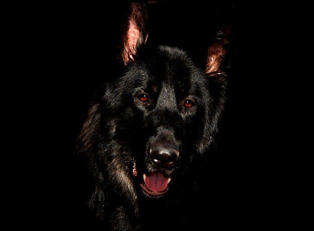 Barguest The Spectral Dog Folklorethursday Training Your Dog Dog Training Happy Dogs