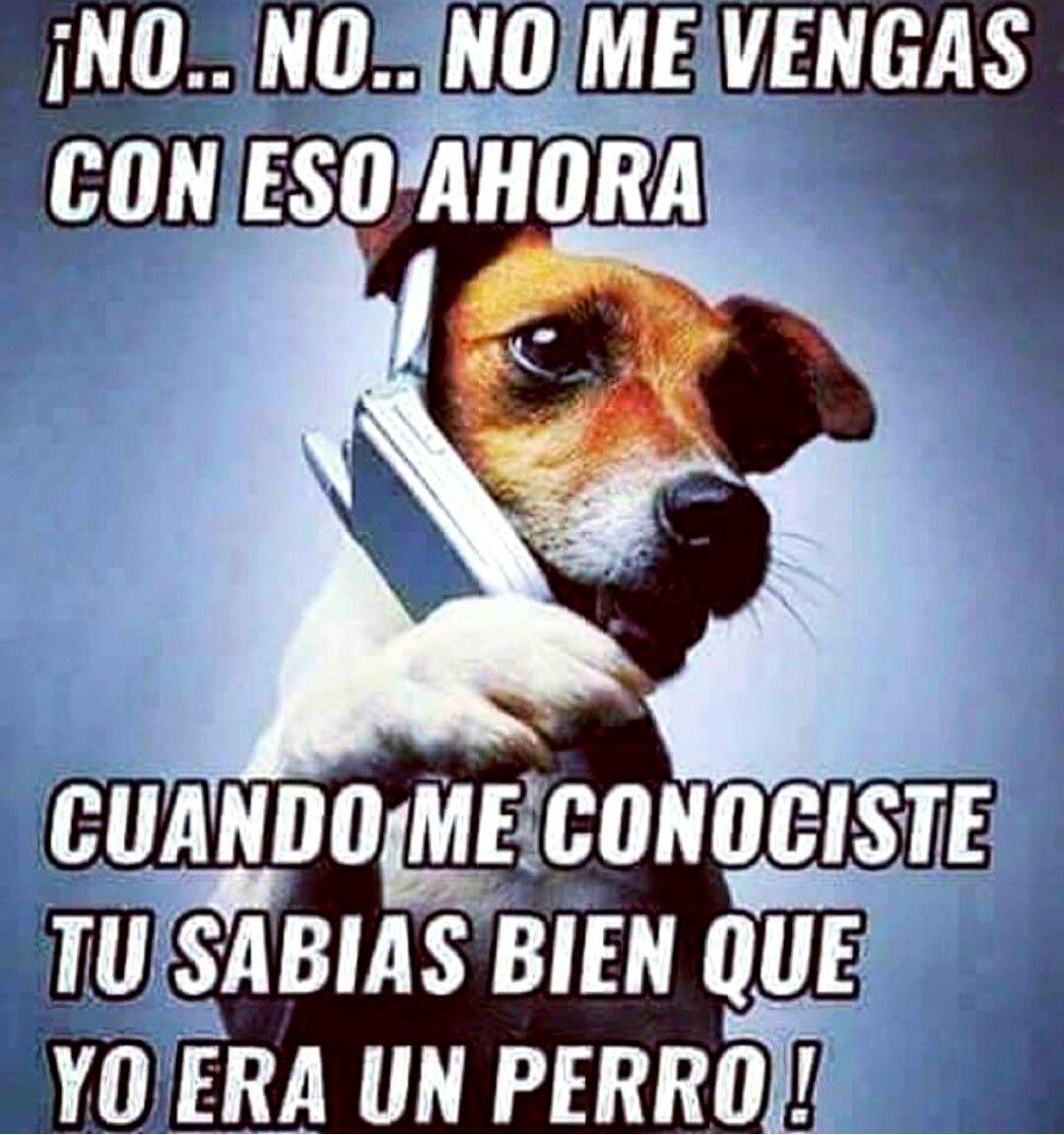 Pin De Tejadajosue En Pensamientos 10 Cachorros Graciosos Mascotas Frases Memes Perros