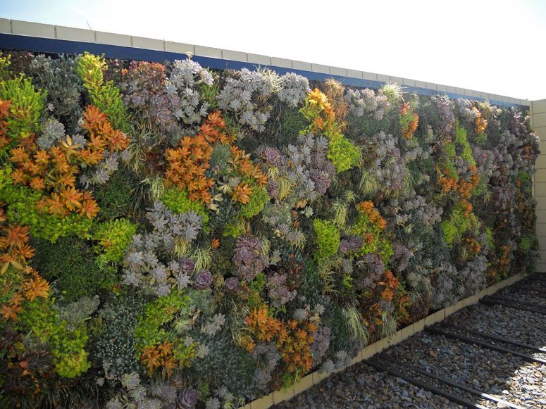 Image Result For Living Wall Outside