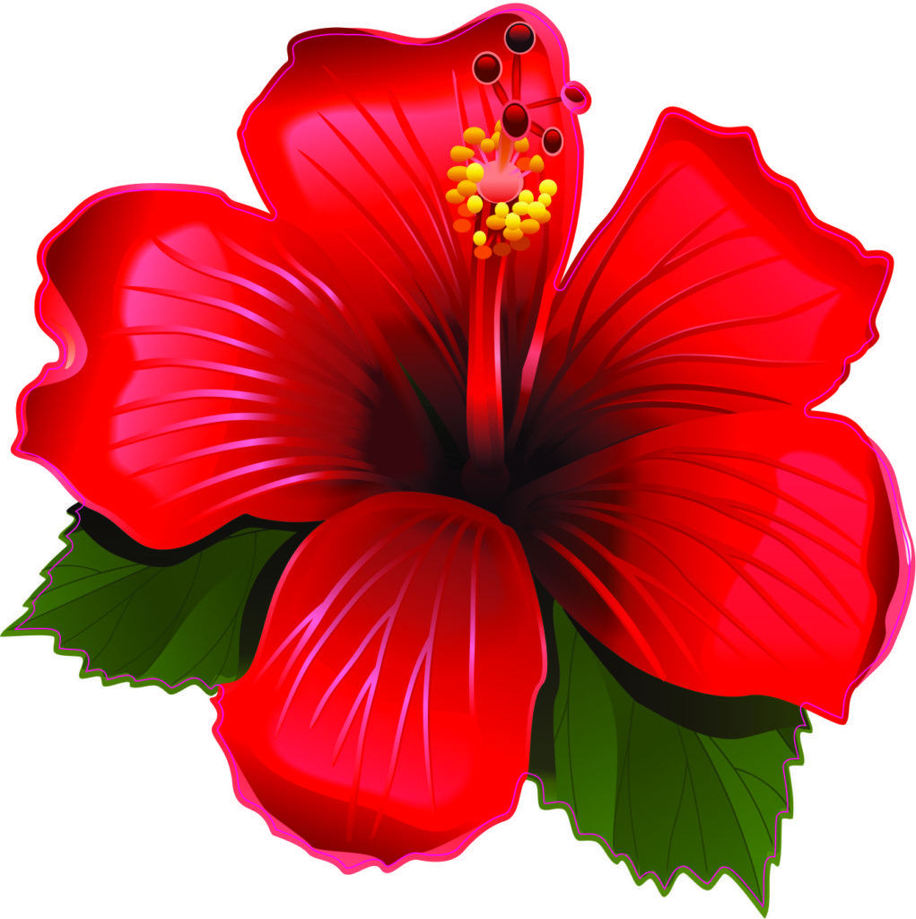4 5in X 4 5in Red Hibiscus Vinyl Sticker Stickertalk Hibiscus Drawing Vector Flowers Hibiscus Tattoo