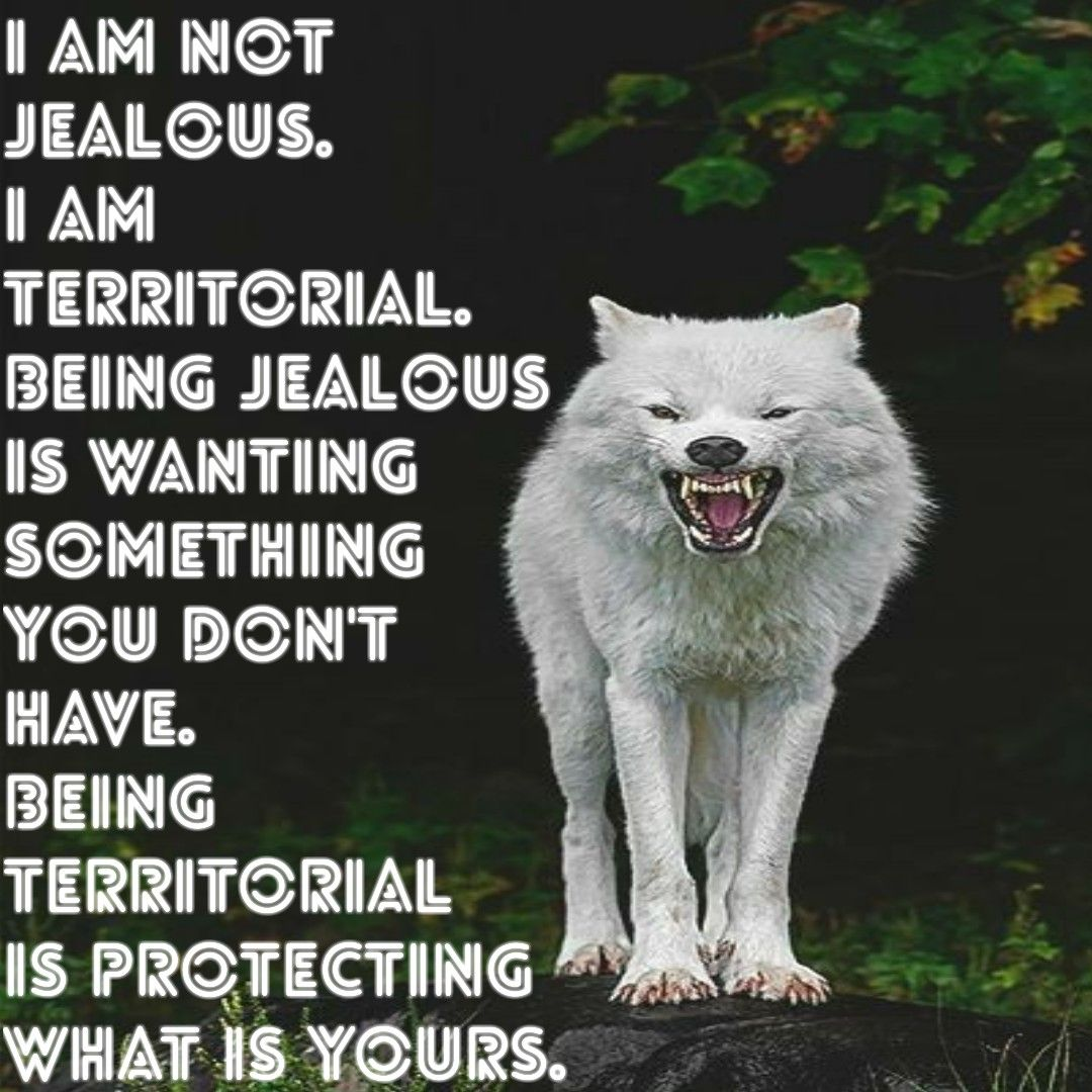Deepe Sprüche, Wolf
