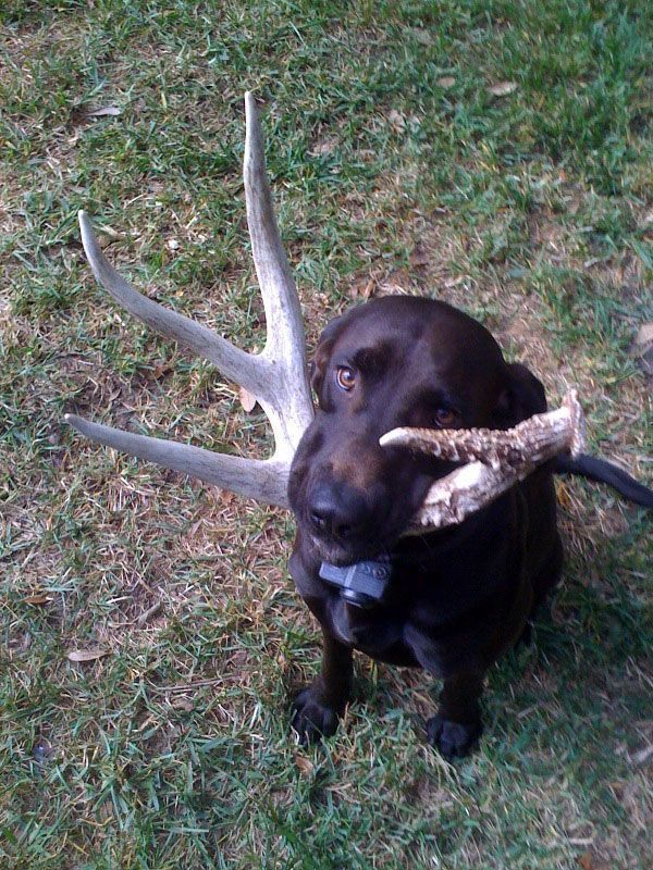 Idea by Lake Girl ♥️ on Sheds... Shed antlers, Training