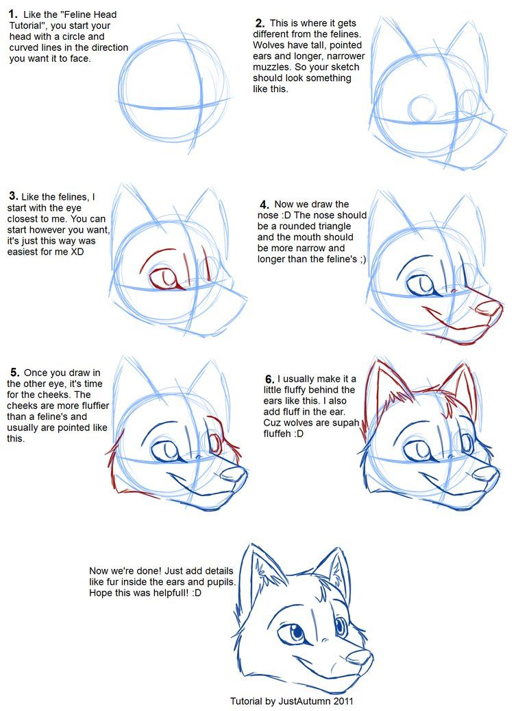 wolf face how to draw