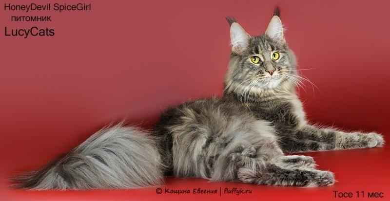 Lucycats