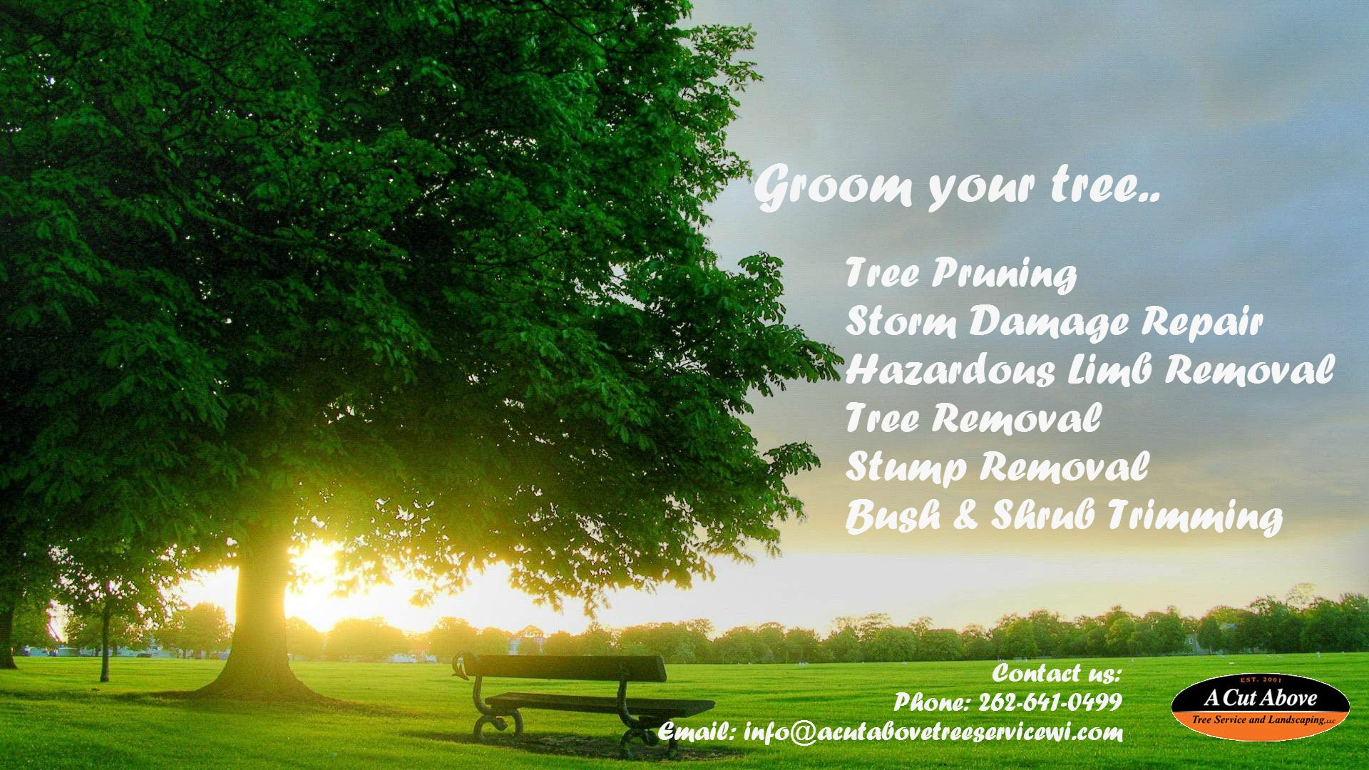 The professional tree removal services are necessary to
