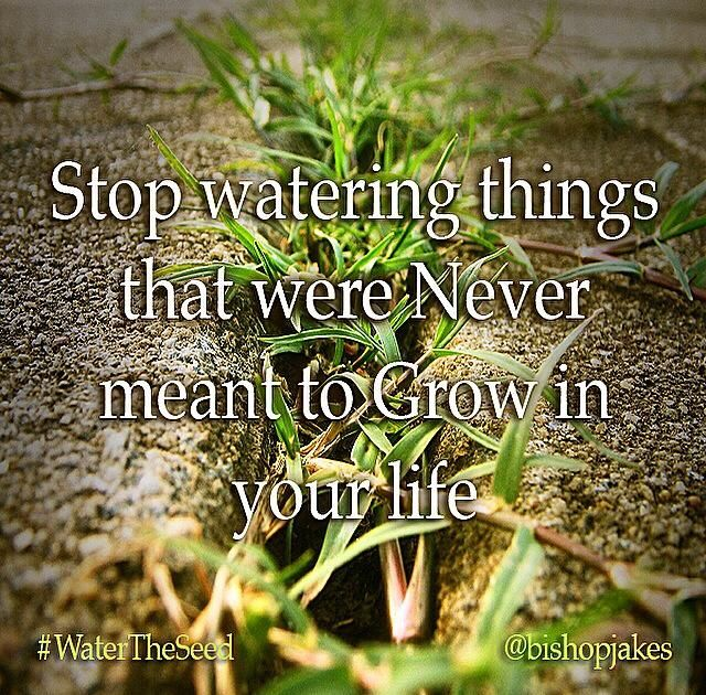 Stop watering things that were never meant to grow in your life. Water what works, what's good, what's right. Stop playing around with those dead bones and stuff you can't fix, its over...leave it alone! You're coming into a season of greatness. If you water what's alive and divine, you will see harvest like you've never seen before. Stop wasting water on dead issues, dead relationships, dead people, a dead past. No matter how much you water concrete, you can't grow a garden.