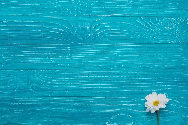 Fundo De Madeira Azul Com Margarida Bonita