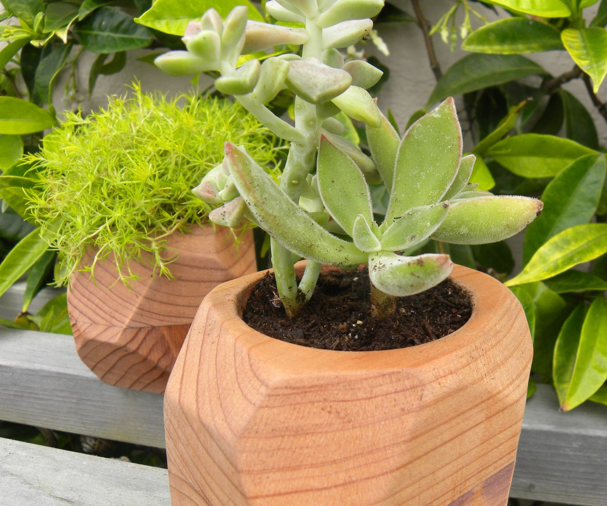 I Made The First Of These Small Succulent Planters With
