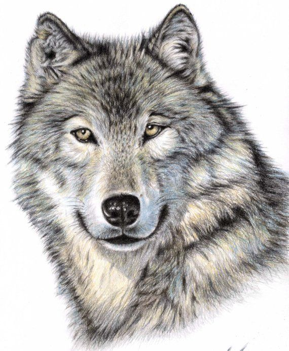 Photo of The Wolf – Fine Art Print beautyful drawing by Artist