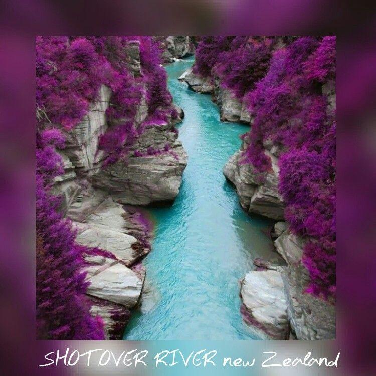 The purple flowers .... soooo pretty!!