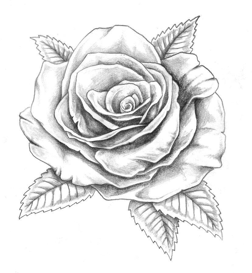 Papirouge Tattoo Zeichnungen Tattoos Zeichnen Tattoo Skizze Rose Tattoo Ideen