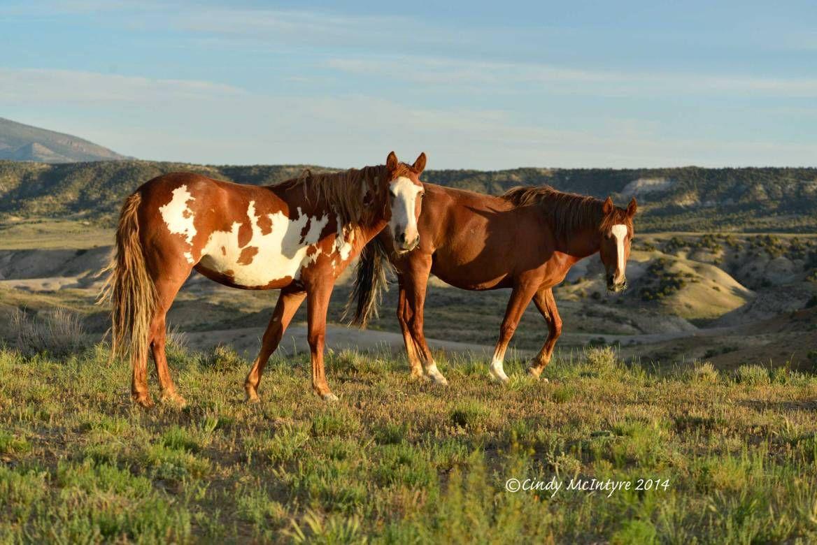 Wild Horses Of Sand Wash Basin Portraits In 2020 Horses Wild Horses Sand Wash Basin